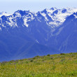 Snow Mountains Hurricane Ridge Olympic National Park Washington — Stock Photo #6186971