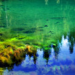 Green Moss Garden Underwater Gold Lake Snoqualme Pass Washington - Stock Photo