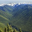 Green Valleys Evergreens Snow Mountains Hurricane Ridge Olympic - Stock Photo