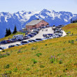 Hurricane Ridge Visitor Center Snow Mountains Purple Lupine Oly - Stock Photo