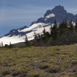 Little Mount Rainier Sunrise Wildflowers Snow — Stock Photo #6187026