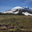 Mount Rainier Sunrise Wildflowers Snow — Stock Photo #6187088