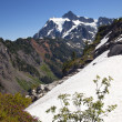 Snowfields Heather Artist Point Mount Shuksan Washington State — Stock Photo