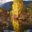 Fall Colors Wenatchee River Stevens Pass Leavenworth Washington — Stock Photo