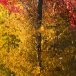 Fall Colors Tree Reflections Wenatchee River Stevens Pass Leaven — Foto Stock #6187238