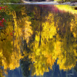Fall Colors Wenatchee River Relections Forest Stevens Pass Leave — Foto de Stock