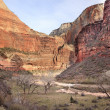 Red Orange Canyon Walls Valley Virgin River Zion National Park U — Stock Photo
