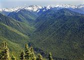Green Valleys Evergreens Snow Mountains Hurricane Ridge Olympic — Stock Photo