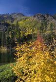Fall Colors Yellow Mountain Lake Leavenworth Washington — Stock Photo