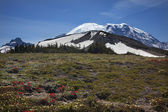 Mount Rainier Sunrise Wildflowers Snow — Stock Photo