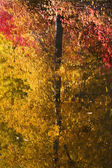 Fall Colors Tree Reflections Wenatchee River Stevens Pass Leaven — Stock Photo
