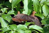 Bird couple — Stock Photo