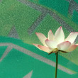 Water lily in window background — Stock Photo