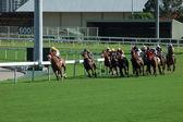 Carreras de caballos — Foto de Stock