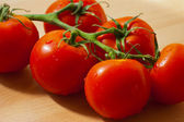 Fresh Tomatoes on the Vine — Stock Photo