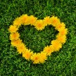 Dandelion heart on a grass — Stock Photo