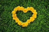 Dandelion heart on a grass — Stock Photo