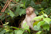 The monkey sits on tree branches — Stock Photo