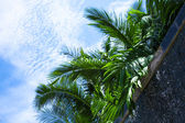 Leaves of a palm tree against the sky — Stock Photo
