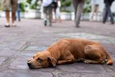Evsiz köpek — Stok fotoğraf