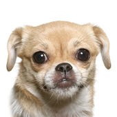 Little fun dog face — Stock Photo
