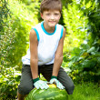 Watermelon — Stock Photo #6218781