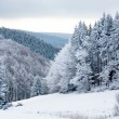 Winter forest — Stock Photo #6253369