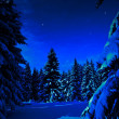 Winter forest at night — Stok fotoğraf