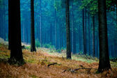 Foggy woods — Stock Photo