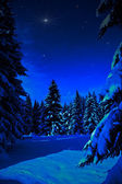 Winter forest at night — Stock Photo