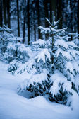 Forest in the winter — Stockfoto