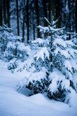 Les v zimě — Stock fotografie