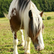 Stock Photo: Horse paddock