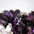 Violet aromatic petals — Stock Photo