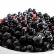 Black currant in the white dish — Stock Photo