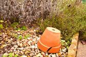 Terracotta pot — Stock Photo