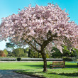 Stock Photo: Blossom tree