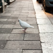 Urban birds — Stock Photo