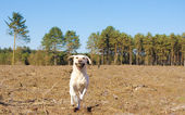 Dog in the countryside — Stock Photo