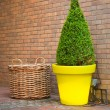 Stock Photo: Topiary