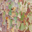 Stock Photo: Tree bark