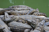 Crocodiles piled up — Stock Photo
