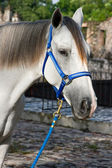 Close-up de cavalo 3 — Fotografia Stock