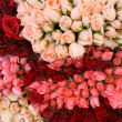 Bunch of roses 3 — Stock Photo