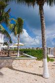 棕榈树在沙滩 — 图库照片