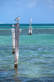 Seagulls — Foto de Stock