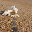 Treasure on the beach — Stock Photo