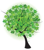 Summer maple green tree — Stock Vector