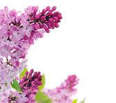 Marco flores de primavera — Foto de Stock