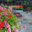 Garden center — Stock Photo #6106973